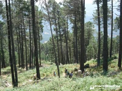 Pinares de Piedralaves;parque natural de la sierra calderona parque natural de aralar outlet ropa de